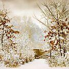 Winter Woods by Jessica Jenney