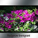 Hedgerow Immigrant by AndyReeve