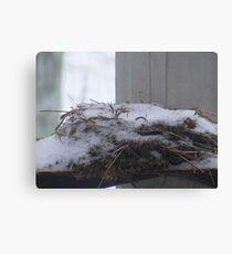 winters nest Canvas Print
