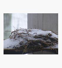 winters nest Photographic Print