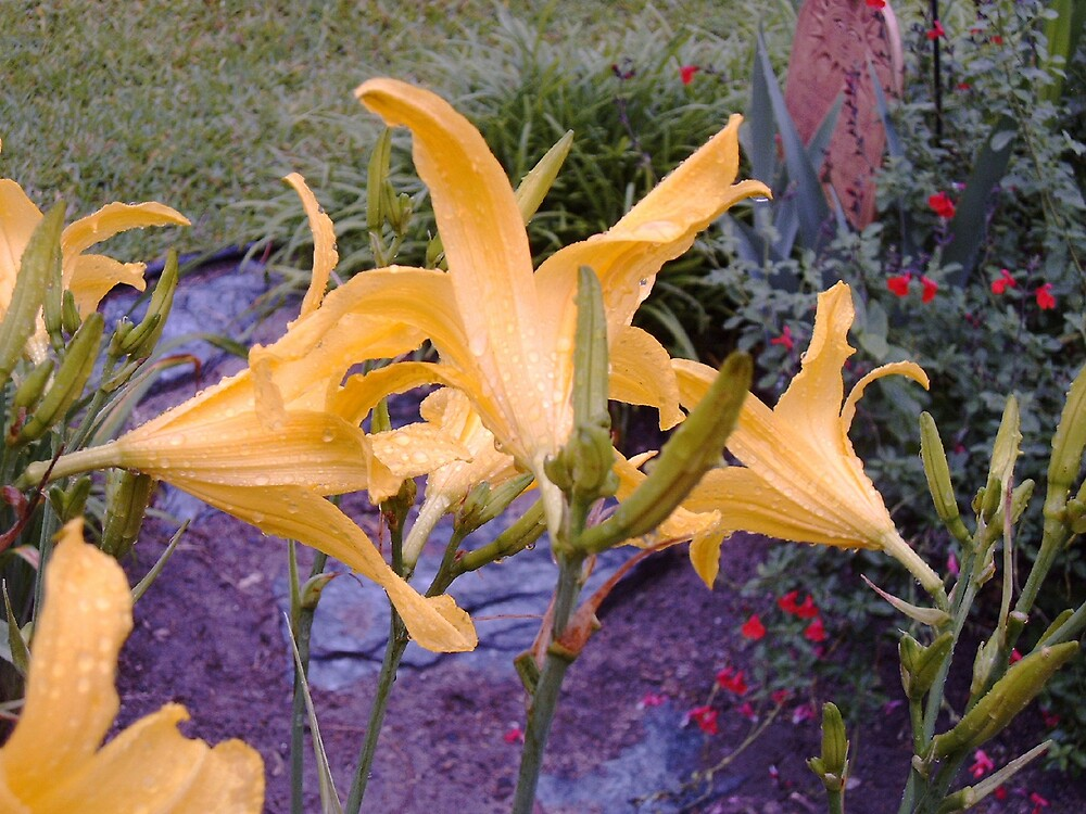 Daylilies After The Rain by Ray1945