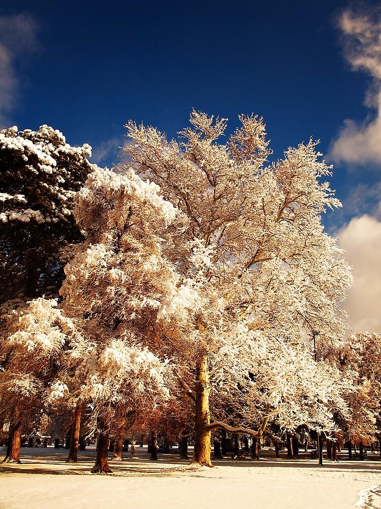 Tree in color (II) by XiuyiFan