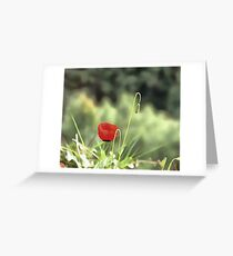 One Poppy Greeting Card