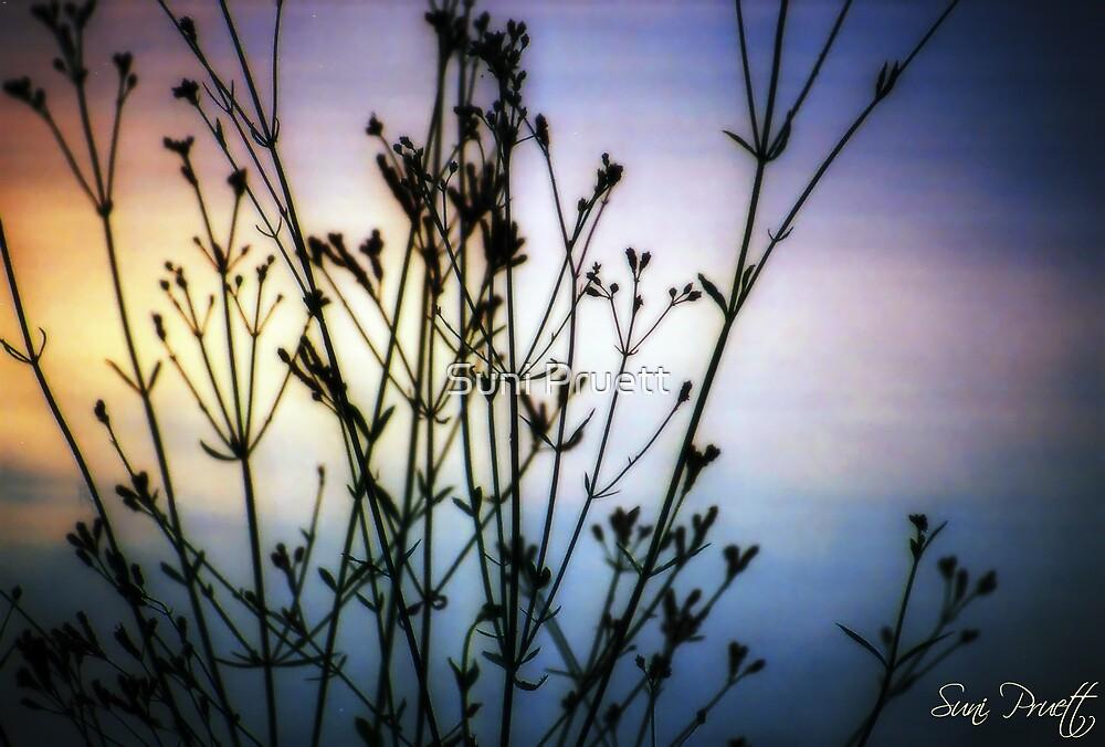 Mesmerize by Suni Pruett