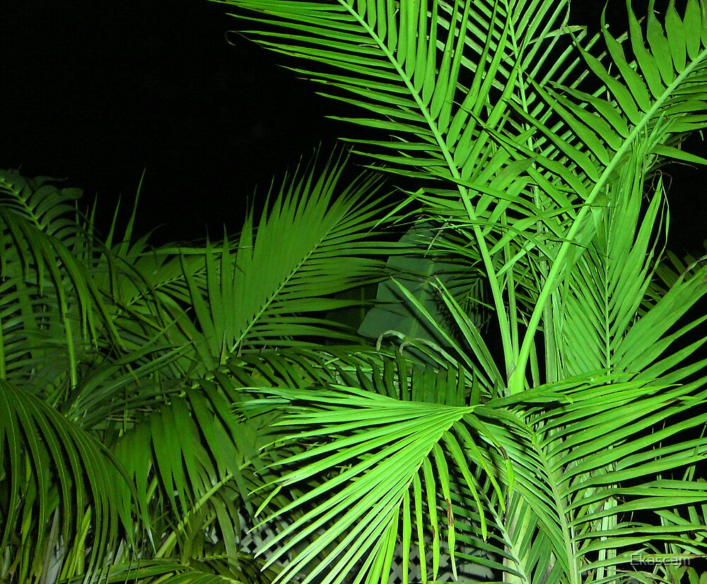 A PALM AT NIGHT by Ekascam