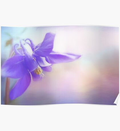 Painted Purple Columbine Poster