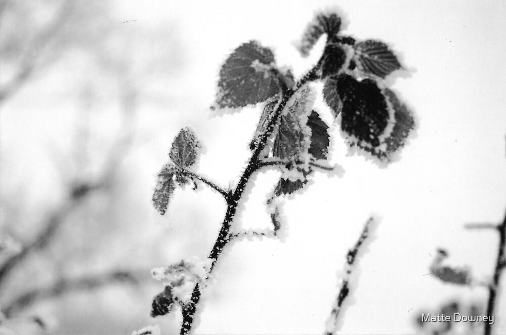 snowy branch by Matte Downey