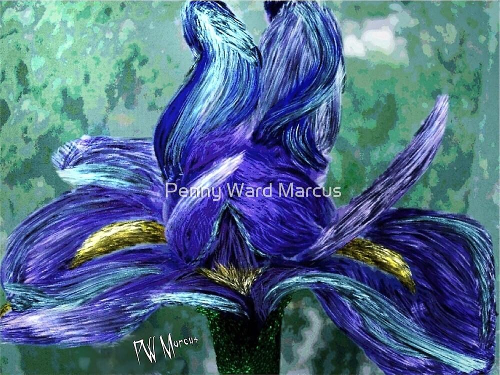 Iris bloom by Penny Ward Marcus