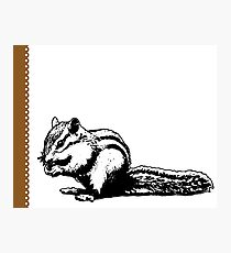 Chipmunk - Critter Love Collection 4 of 6 Photographic Print