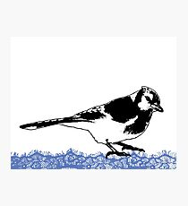 Blue Jay - Critter Love Collection 2 of 6 Photographic Print