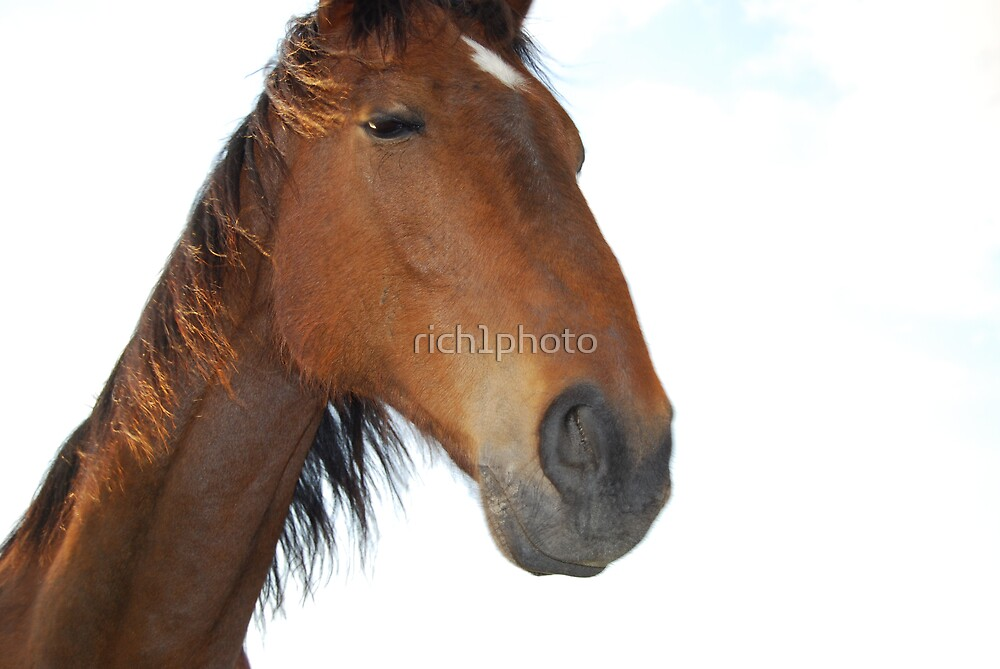 horse by rich1photo
