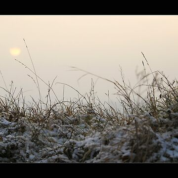 winter sun II by hanseder