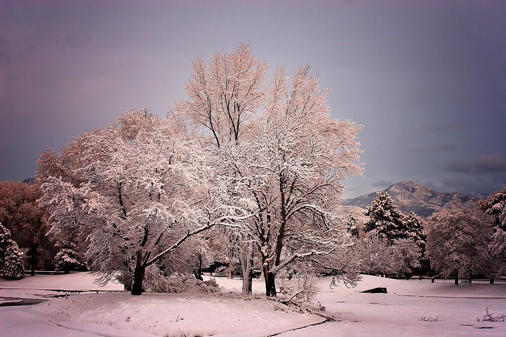 Tree in color (VIII) by XiuyiFan