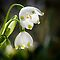 Flowering Bulbs - Closed until September - No Insects or Text