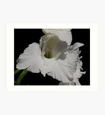 photoj flora Art Print