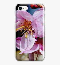 Cherry Blossom iPhone Case/Skin