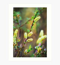Spring Floral Pussy Willow Art Print