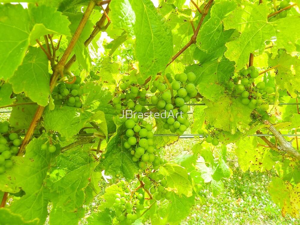Vineyard bunches by JBrastedArt