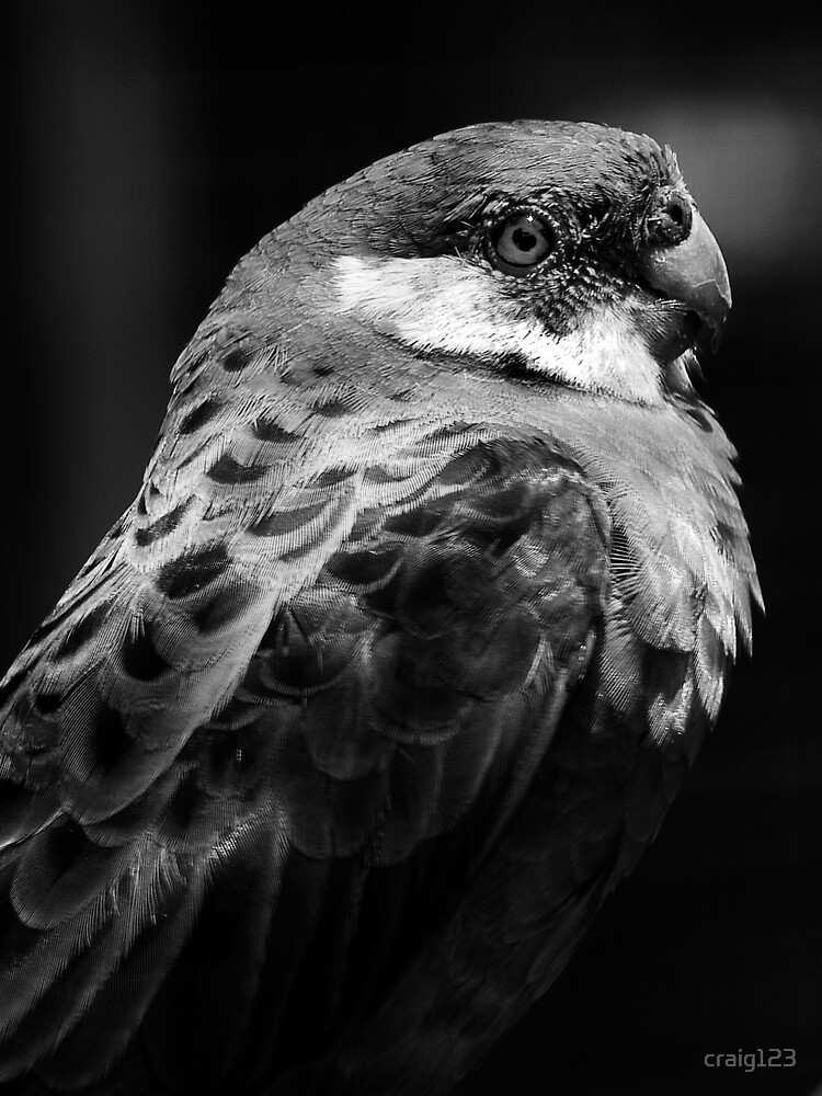 Parrot by craig123