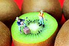 Band Show On Kiwi Fruits by Paul Ge