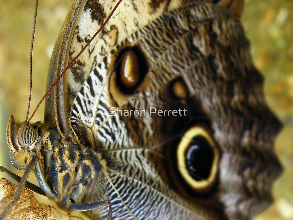 Spots?? I've got stripes in front of my eyes by Sharon Perrett
