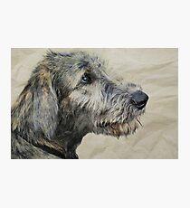 Irish Wolfhound Puppy Photographic Print
