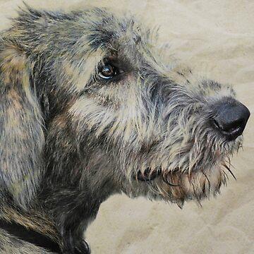 Irish Wolfhound Puppy by LaurieMinor
