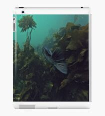 Stalking Rock Fish iPad Case/Skin