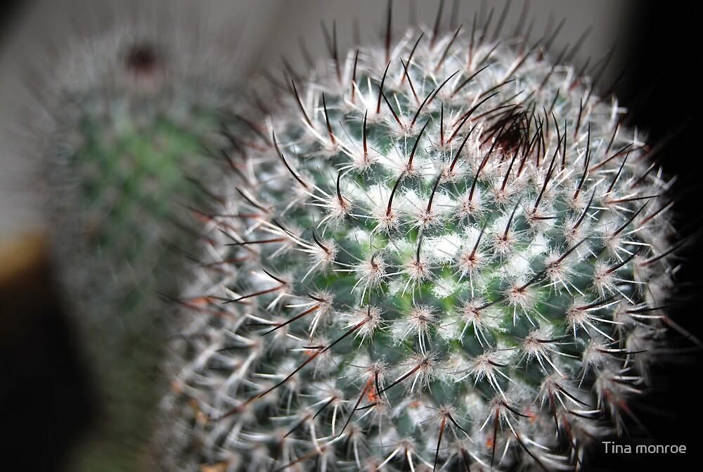 cactus (2) by Tina monroe