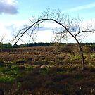 Sapling Arch. by Billlee