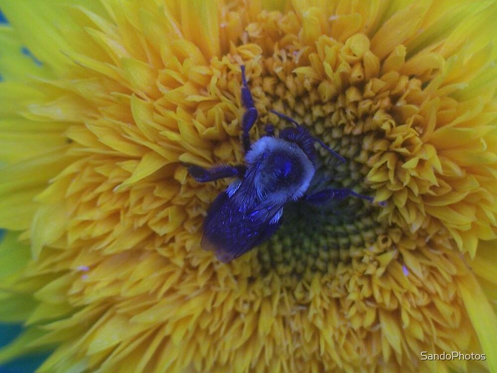Bee on Flower by SandoPhotos