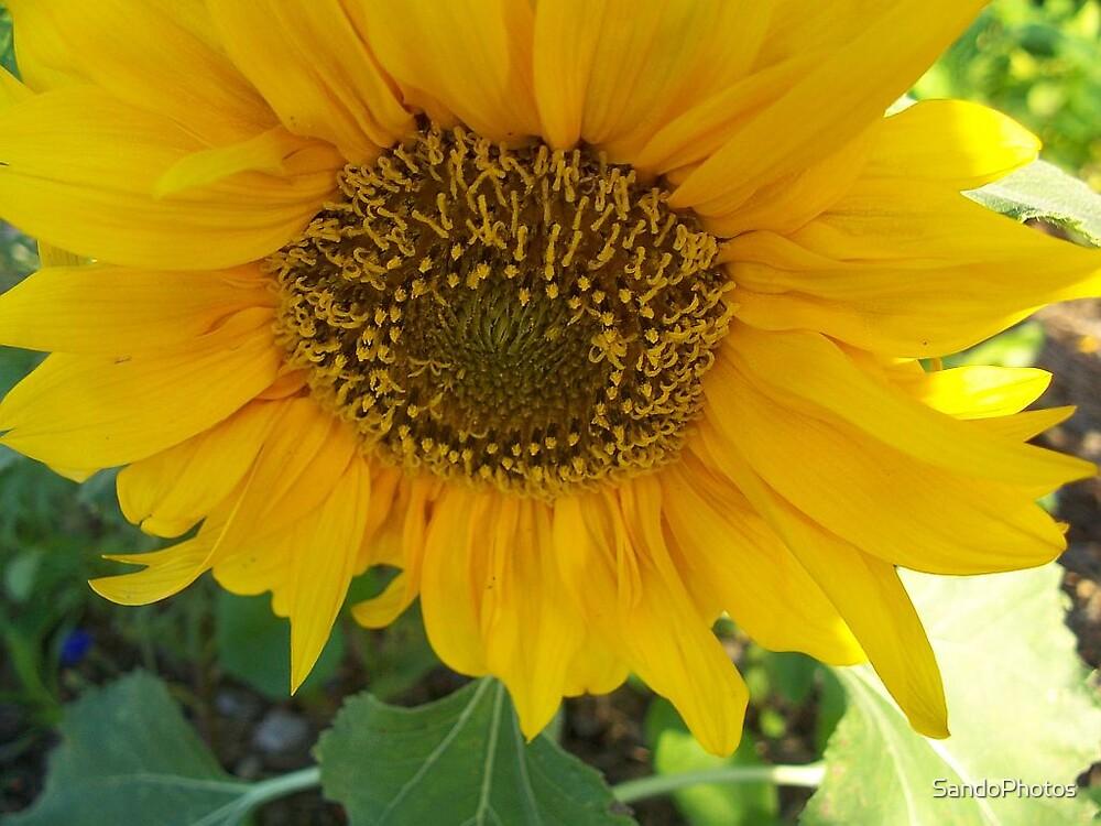 Yellow Flower by SandoPhotos