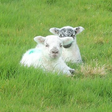 little lambs at Easter by amylw1