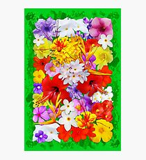 Exotic Flowers Colorful Explosion Photographic Print