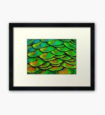Peacock feather armour Framed Print