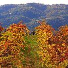 october vineyard by capbydiana