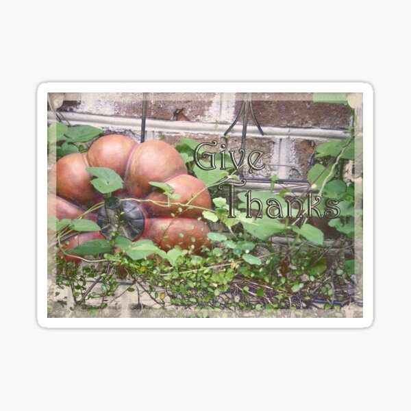 """""""Give Thanks"""" Thanksgiving Day Card Sticker"""