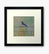 Wren on a wire Framed Print