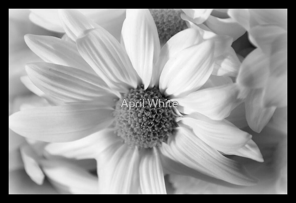 Black & White by April White