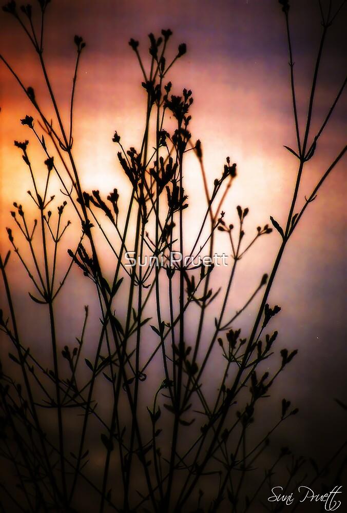Mesmerize pt II by Suni Pruett
