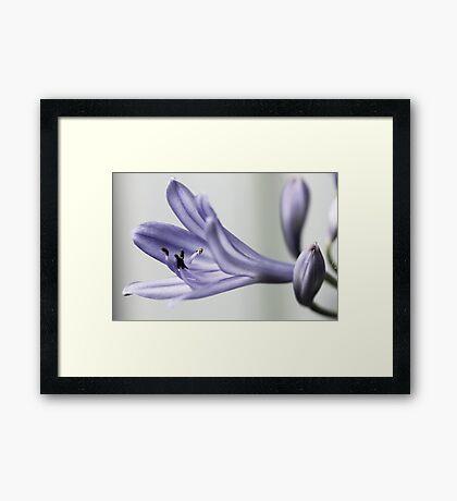 Flower - Blue Framed Print