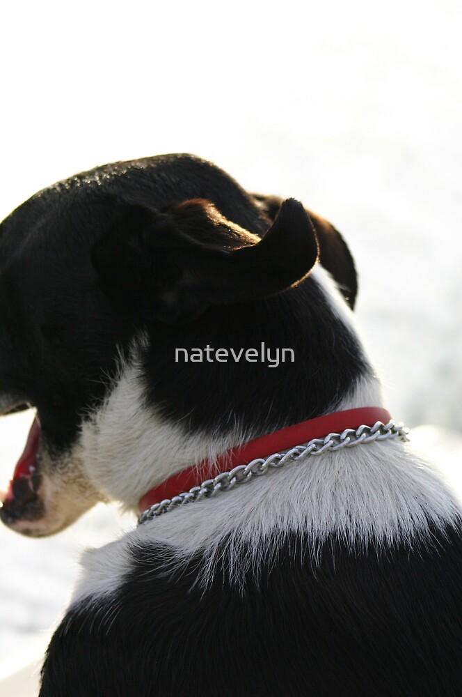 Happy Pooch by natevelyn