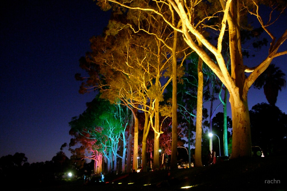 Kings Park lights by rachn