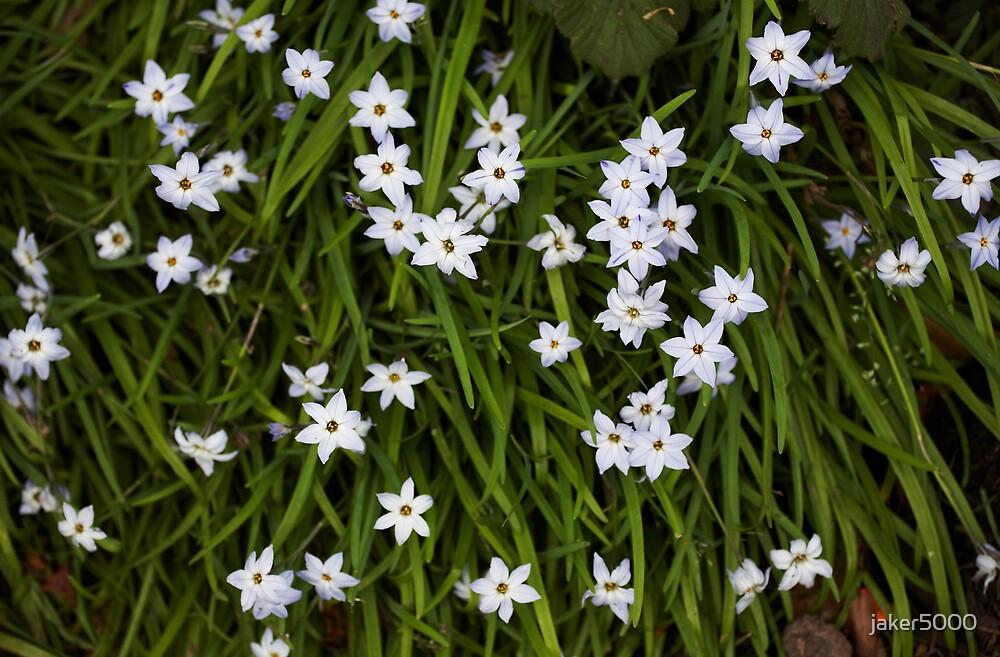 Dainty flowers by jaker5000