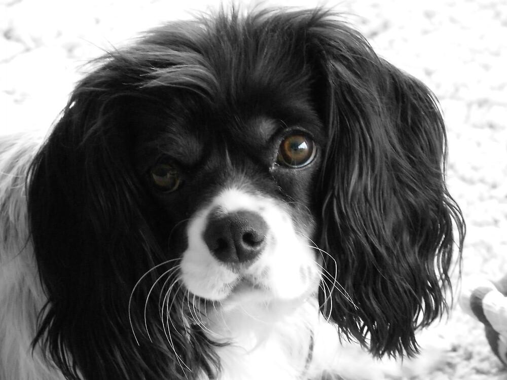 Puppy Love by Scott Cooper