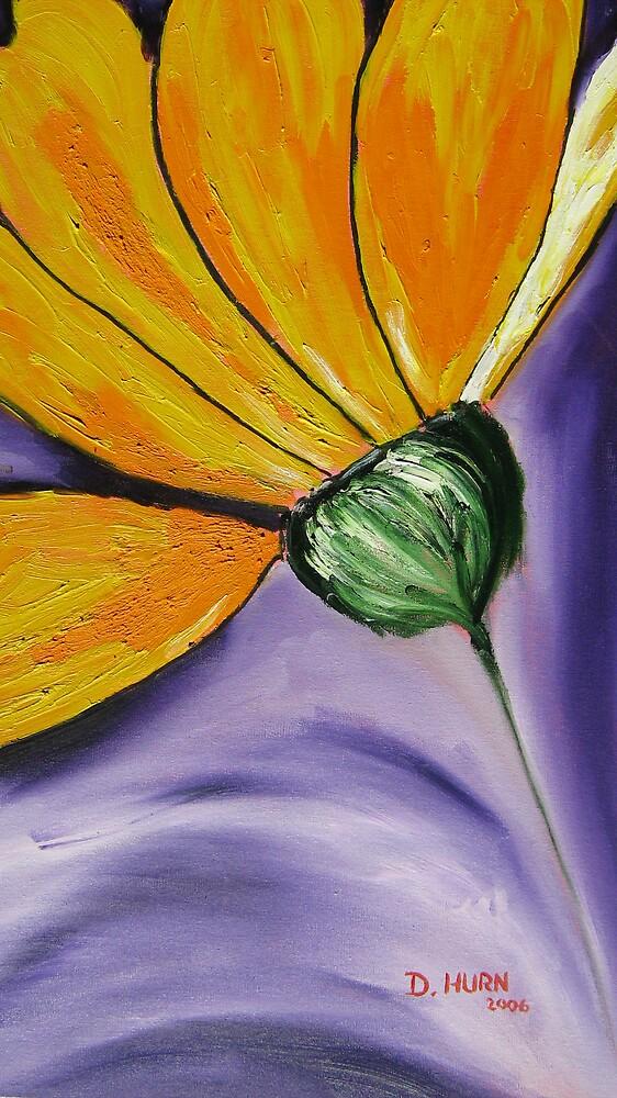 Namakwa Daisy by Duane Hurn