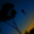 Spider Sillouette by Rebecca Newton