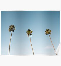 Three Palm Trees Blue Sky California Poster