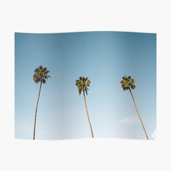 Three Palm Trees Blue Sky California Poster