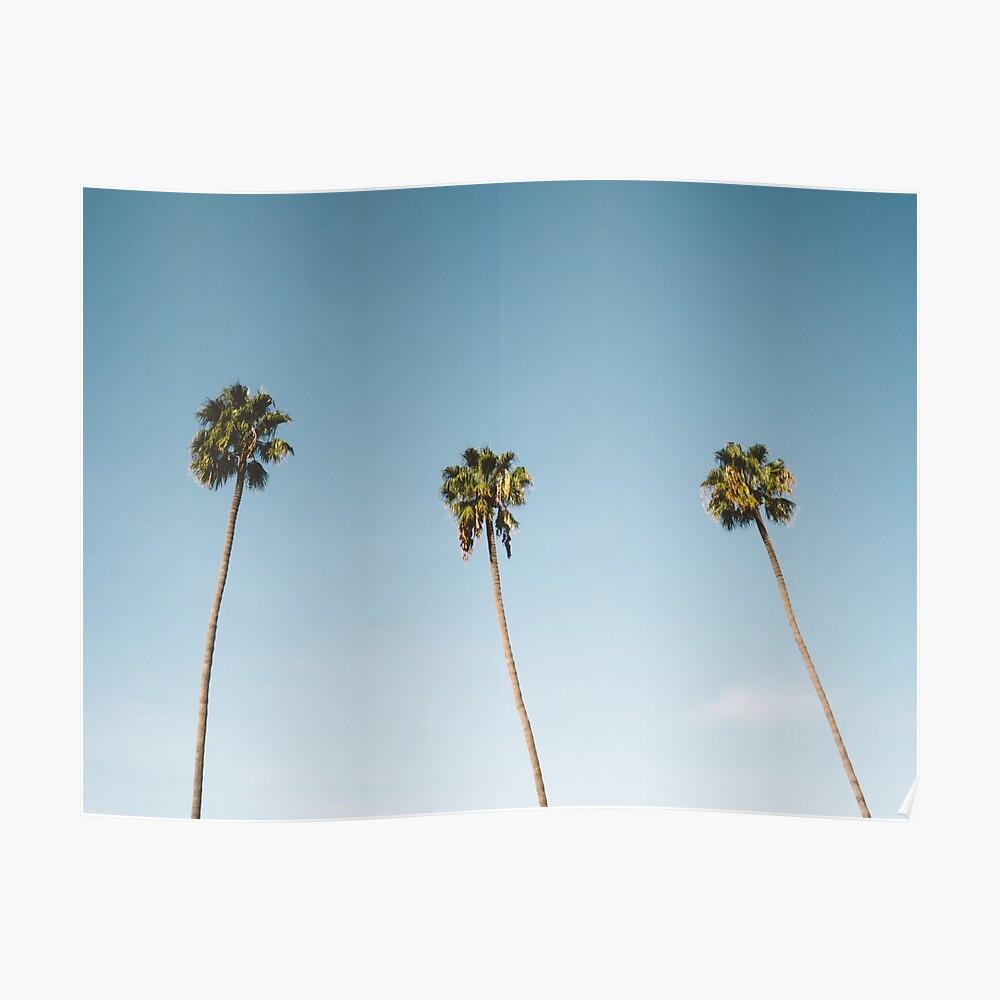 Tres palmeras Blue Sky California Póster